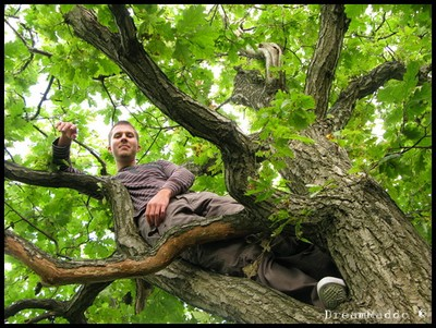 Simon i trädet