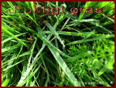 Fuktigt i gräset