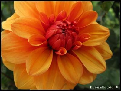 I Simons örtträdgård finns vackra blommor!