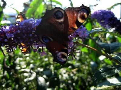 jag leker med mats kamera - fjäril