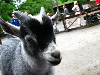 Man får mata djuren på skansen - de är tama :)